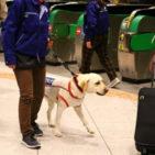JR東日本とセントラル警備保障が危険物探知犬の運用試験を実施